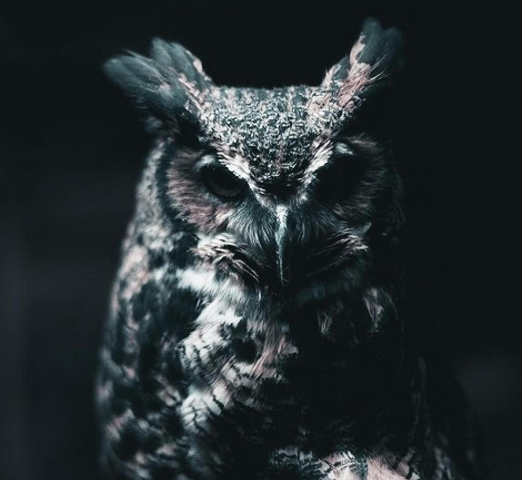 joyryde night owl