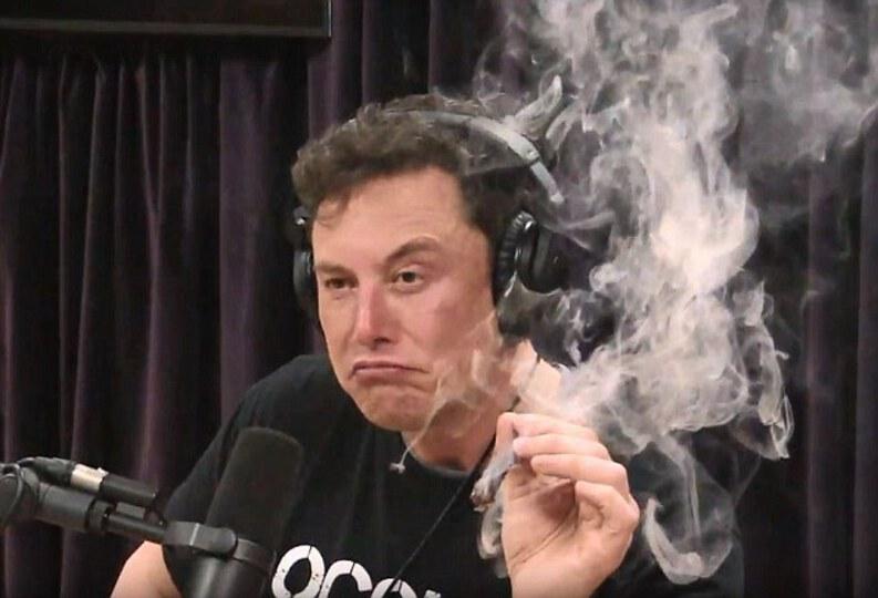 Elon Musk harambe