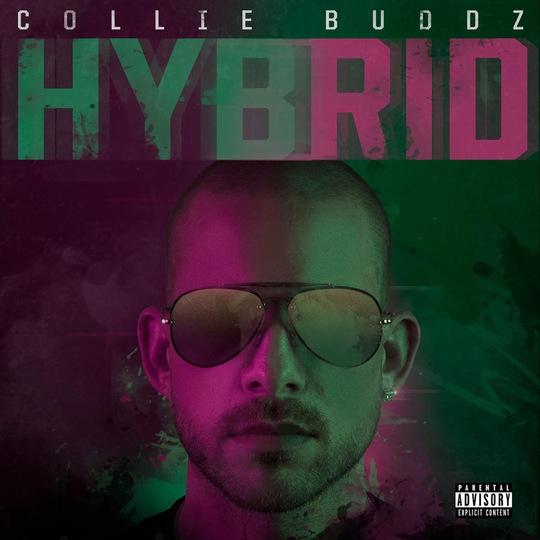collie-buddz